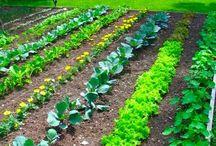 Gardening / by Janice-Bob Ottley