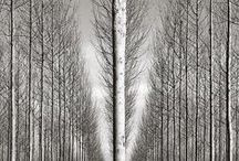 trees / by John Ingamells