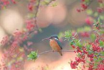 birds / by John Ingamells