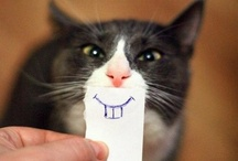 Because Cats are Hilarious / Cats are funny. No caption necessary. / by Happineff