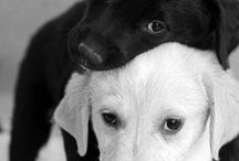 Black & White / by Betsy Cheever