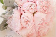 Wedding Bells / by Megan