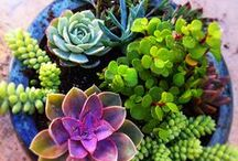 Succulents & House Plants / Indoor plant ideas, tips, and photos. Especially succulents! / by Ashley Lindgren