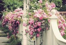 Garden, Yard, Porch and Patio / by Chelle Atwater