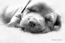 Sleeping Beauties / by Animal Practice NBC