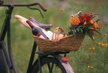 Napa & Sonoma Living / Enjoy the scenic beauty, mild Mediterranean climate, healthy living, fresh cuisine, fine wine, cultural events, recreation and friendly, active people who call wine country their home. / by Knight Wine Tours