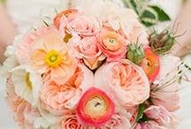 Bouquet & Cake / by Becca DeMattia