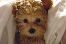 pups / by Kristin Robinson