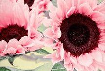 Flower Power / by Sukie Kuck