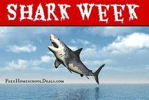 Shark Week! / by Wendy Johnson