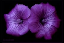 Purple Inspiration / by Tanya Theresa Vautour