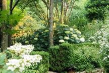 Garden Ideas / by Anne Clark