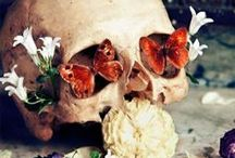 Anatomical Obsession  / by Lauren Rachelle