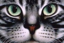 Cat - Art / by Dorothy Rues