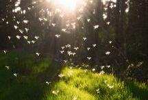 Nature's Beauty  / by Lauren Rachelle