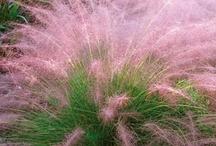 Plants n' Gardens / by Ronda Morris Laveen