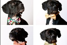 puppy love <3 / Beds, food, products, and their cute little faces! / by Audrey Green