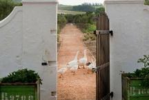 If I had a farm... / by JoDee Molina