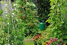 Gardening ✿ Food / How to Grow Vegetables and Fruits / by Jollie K