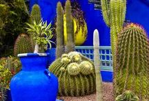 Gardening ✿ Cacti ✿ Succulents / My ♥ for Cati, Sedum and Succulents / by Jollie K