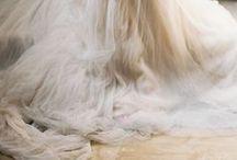 Wedding / by Joy Dreyfus