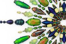 insects / by Oksana Valentelis