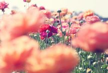 Flowers / by Gaby Arratia