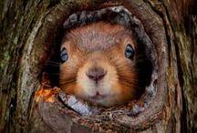 Cute Animals / by Hannah Arizona
