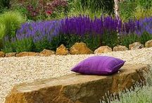Garden Design / Ideas & Inspiration / by Carmel @SerendipityDSGN