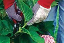 Great Gardening Ideas / by Kathy Burchfield