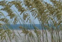 Our Island / by Kathy Burchfield