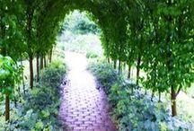 Dream Gardens  / by Amanda Wright