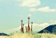 Giraffes are Great / by Lauren Woods