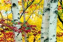 Trees ... Make me Happy :) / by Paula Jeske