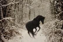 Horses / by Teri Mosby