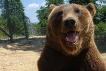 Bears / by World Animal Protection Australia