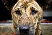 Dogs / by World Animal Protection Australia