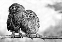 [ owls ] / by Kimberly Reed Niznik