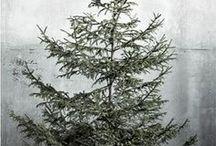 [ little trees ] / by Kimberly Reed Niznik