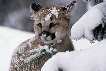 wild beasties in n-east ND / Animals in my back yard / by deirdre lee