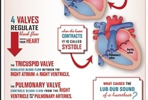 Heart Infographics: An Incredible Machine  / Infographics about about the human heart, blood, conduction, and much more. All are part of the incredible machine that is the cardiovascular system. / by Texas Heart Institute