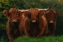 if it's nae scoe-ish it's crrrap / cinneadh - gaelic for clan / by deirdre lee