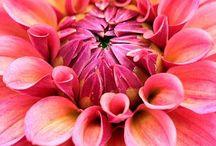 Blossoms / by Seema فاطما