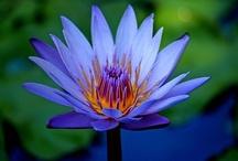 Flower Power / by Khufrah Lessey