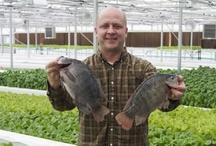 Farm ~ Fish (Aquaponics & Hydroponics) / by Robin Mundy