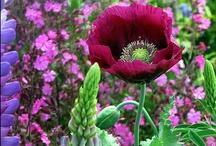 Garden Ideas / by Ann Merchant