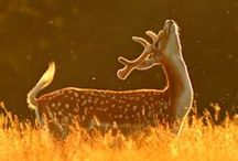 Animals. / by Mandie Haggard