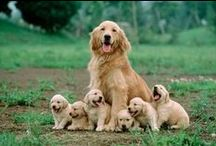 puppies & cutie patuties / Dogs, cats, babies and other animals / by Virginia Hinostroza