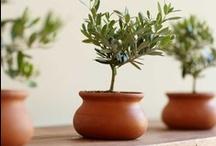 Plants in pots... / by IssiLen