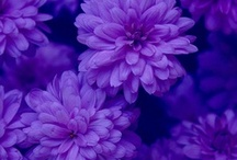 Color...Indigo / by Colleen Jenkins